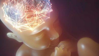 Photo of Cercetări recente demonstrează că activitatea creierului începe încă din viața intrauterină