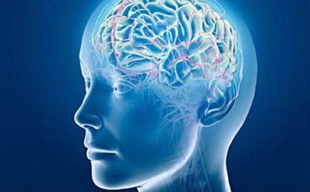 Photo of Studiile asupra creierului contrazic ideologia de gen