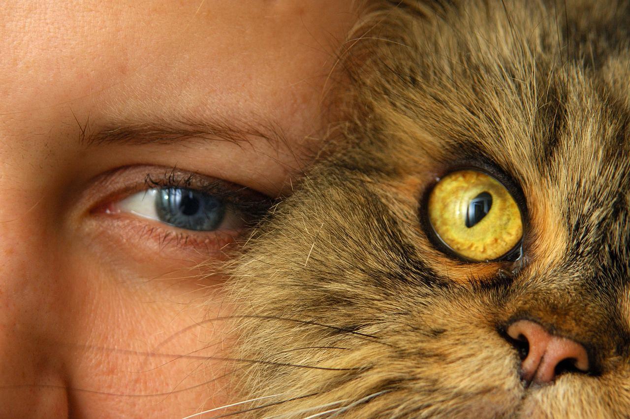 Photo of Legătură puternică descoperită între deținerea de pisici și bolile mintale
