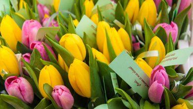 Photo of Începe Luna pentru Viață 2018! Pe 8 martie, la Maternitatea Giulești din București, voluntarii asociației Studenți pentru Viață le vor oferi flori mămicilor