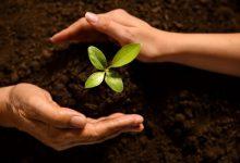 Photo of Irina Petrea: Un părinte e asemenea unui grădinar care crește o plantă dintr-o sămânță
